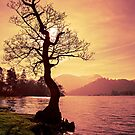 Lakeside Tree by David Lewins LRPS