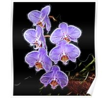 Phalaenopsis Orchid in Purple Poster
