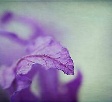 Purple Lavender by Nicole Doyle