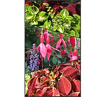 End of Summer - Coleus and Fuchsia Collage Photographic Print