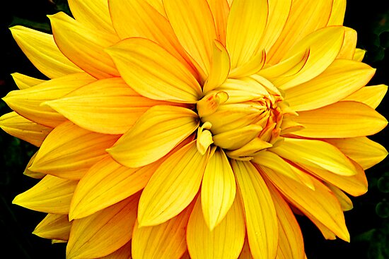 Big, Bold and Yellow by John Butler