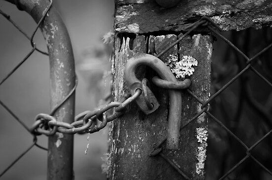 Never too late to shut the gate! by Clare Colins