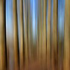 Tall Trees by Karen Boyd
