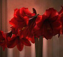 Amaryllus #13 by Eileen McVey