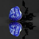 Mirror Blue Rose by JuliaFineArt