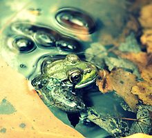 Frog Stomp by JeannieBlue