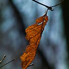 Hanging On - A Leaf That Refuses to Fall by Deb Fedeler