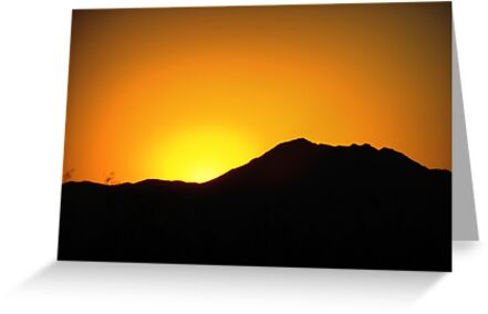 Morning Glory in Marana by Kimberly P-Chadwick