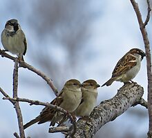 Where Two or Three Come Together by Deb Fedeler