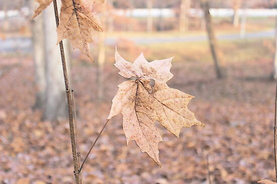 Autumn Leaves in Beautiful North Carolina by aprilann
