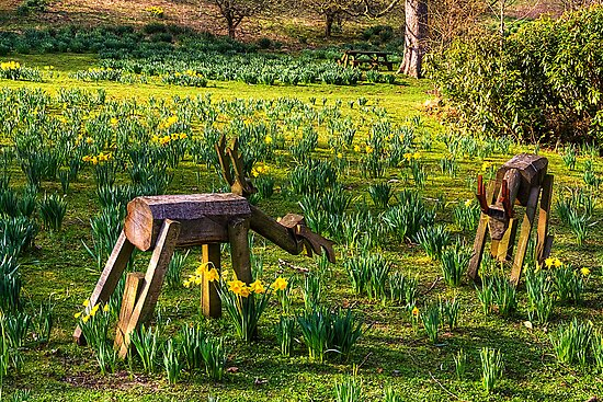Step away from my Daffodils by Tom Gomez