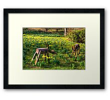 Step away from my Daffodils Framed Print