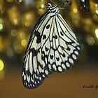 Butterflies by Lorelle Gromus