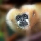 Gibbon ape by dangerouslyclos