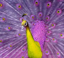 Different coloured Peacock, yellow+purple. by JeanNieman