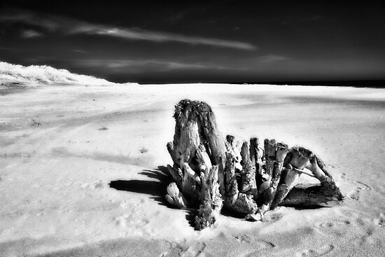 Beach Monster - Outer Banks BW by Dan Carmichael