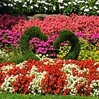 Floral Love Swans by Tom Clancy