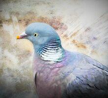 Pigeon of Peace by missmoneypenny