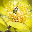 Cactus Flower Visitors by Mikell Herrick