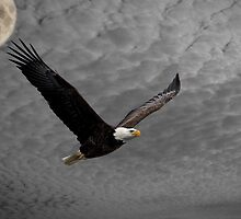 Eagle Soaring High In The Sky by Thomas Young