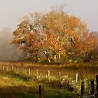 Cades Cove, fall 2012 by photodug