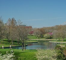Parkland in St.Louis by AnnDixon