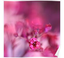Pink Phantasy Poster