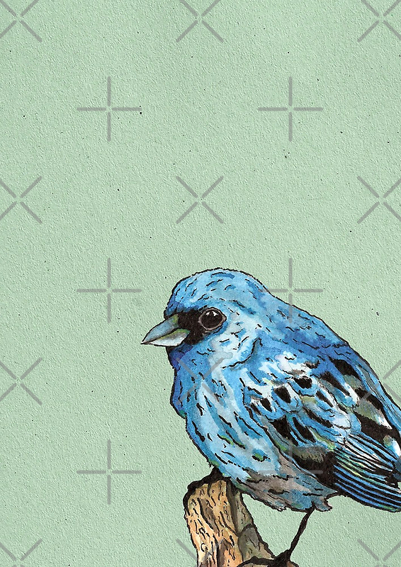 Blue Bird by Calum Margetts Illustration