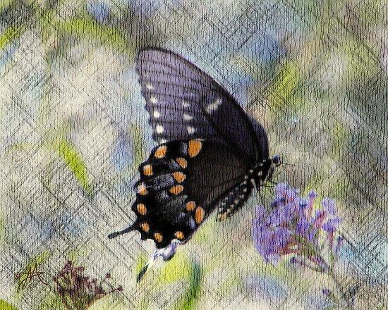 Black Beauty by Pat Moore