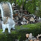 Cheeky squirrel by Lorna Taylor