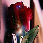 Red Rose and Universe by Claire1412