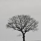 Lone Tree Plus Bird by Stan Owen