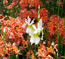 Rhododendron and Iris combo by MarianBendeth