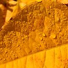 yellow autumn leaf by Jicha