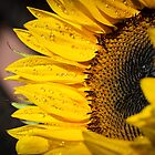 SunShine... by GerryMac