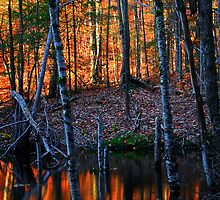 Last Light of the Day Falling on a Beaver Pond by Nazareth