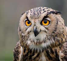 Eagle Owl, Shuttleworth, England by strangelight