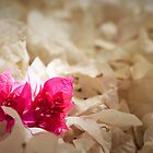 petals by HannelePhoto