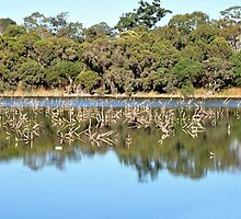Lake Near Joondalup, 1 hour north from Fremantel Western Australia by Sunchia Milic