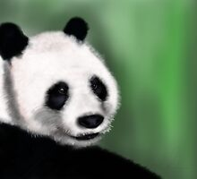 Panda Yang Guang  by Sookiesooker