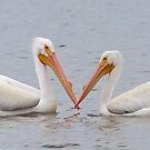 pelicans by Jim Cumming