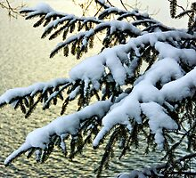 Snow on branches by Baki Karacay