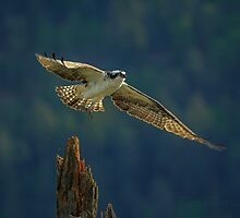 Out Stretched Wings. by BarryHetschko