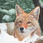 Coyote by Marlene Piccolin