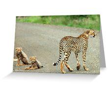 MOTHER & CUBS - THE CHEETAH - Acinonyx jabatus - Jagluiperd Greeting Card