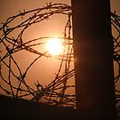 barbed wire by brandi duhon