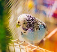 Parakeet by JoseMiguelGago