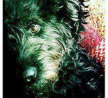 Posing Pooch by AnnieJayne