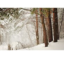 White Silence Photographic Print