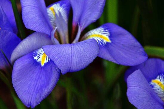 Purple Curves by Susie Peek